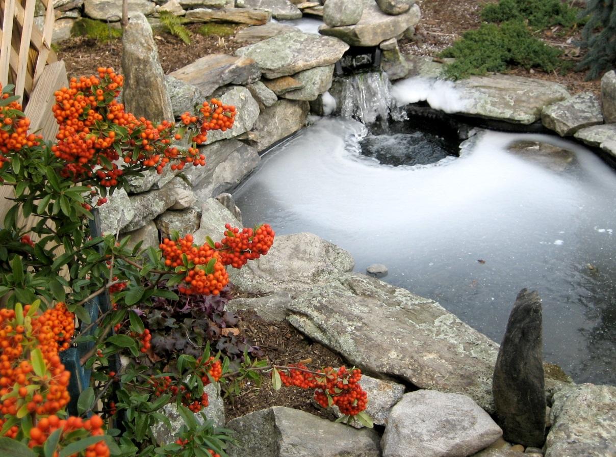 зимний пруд с карпами кои