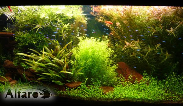 Голландский аквариум.