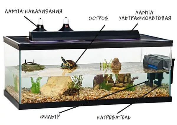 условия содержания красноухих черепах в акватеррариуме