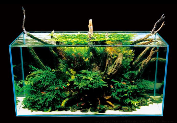 Мизубе - природный аквариум такаши амано