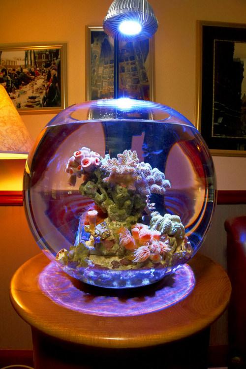 фото аквариума-шара