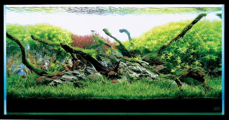 Риобоку - природный аквариум такаши амано