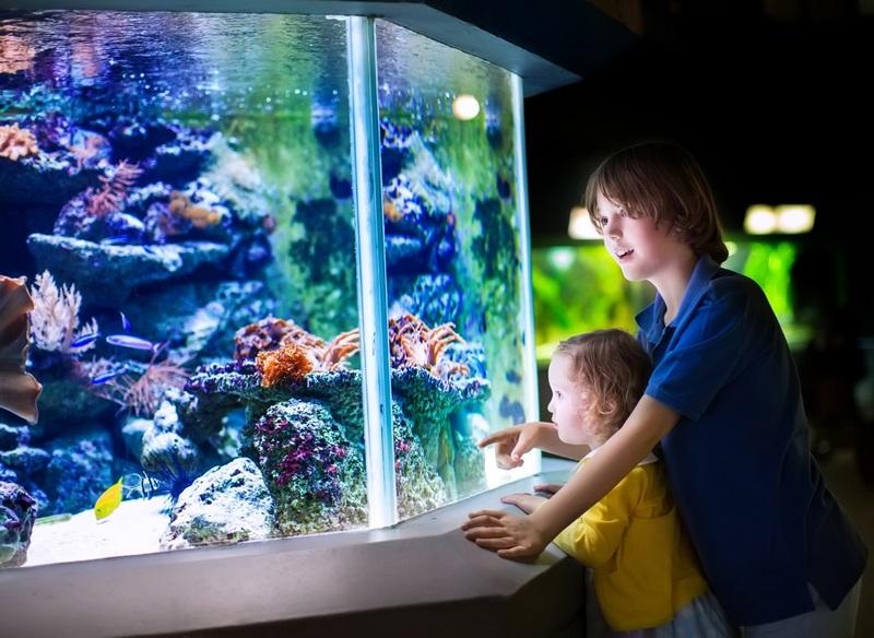 аквариум картинка для детей