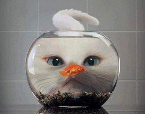 кот и рыбка в круглом аквариуме