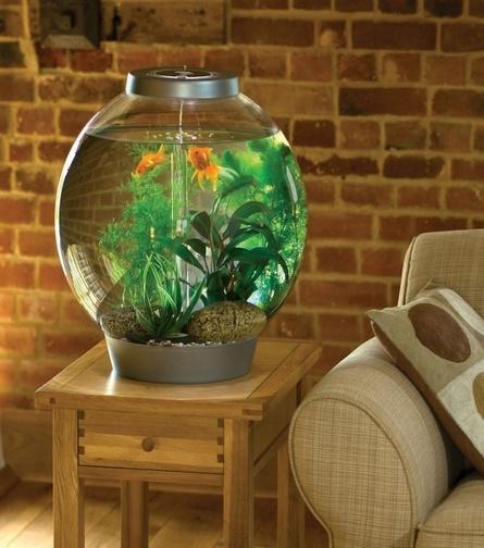 шарообразный аквариум на столике