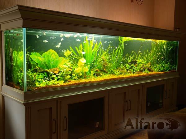 https://akvarium-moskva.ru/interior/bigfoto/apartment24ex2.jpg